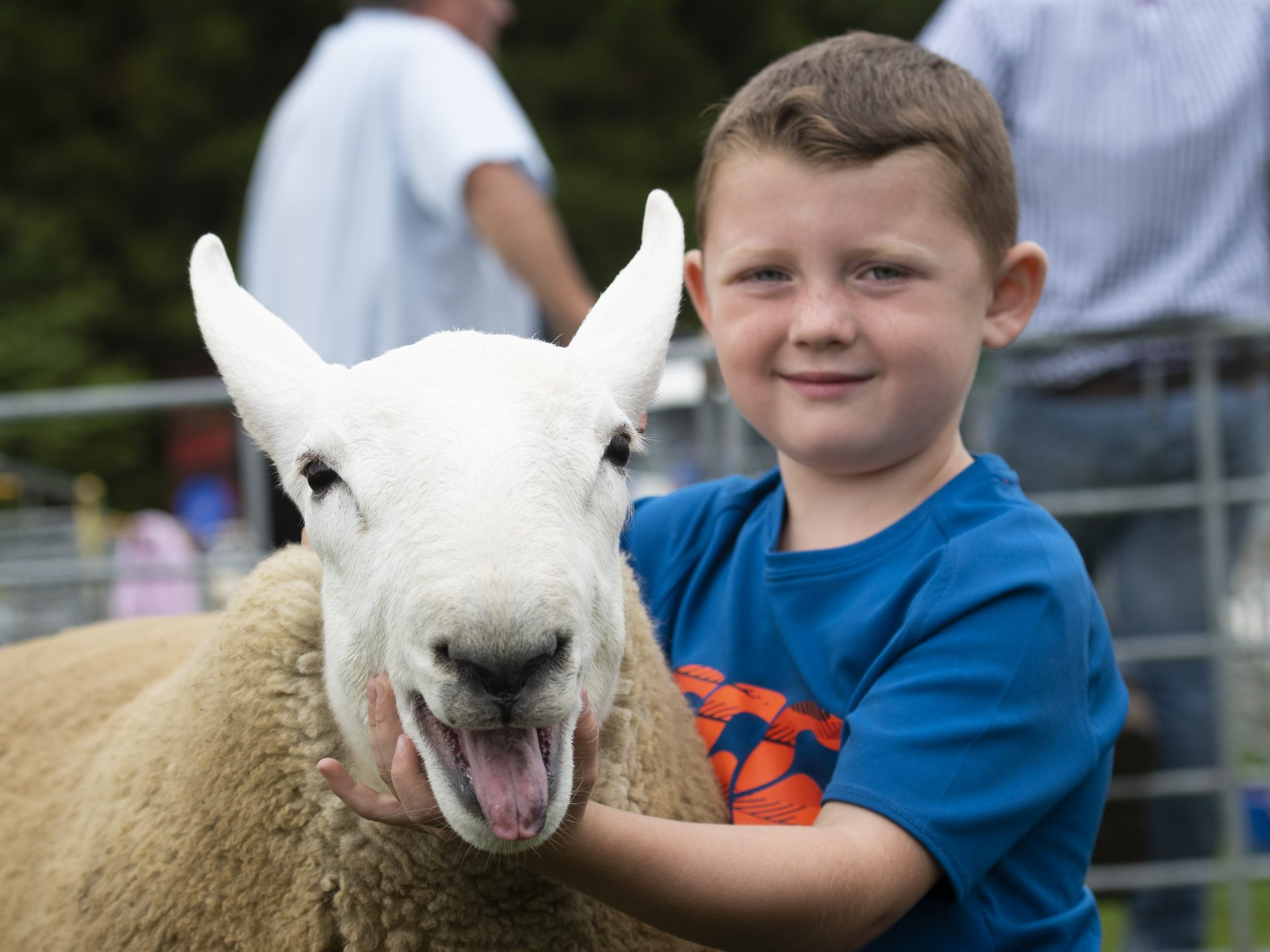 Child with a sheep at the Border Union Show event in Kelso
